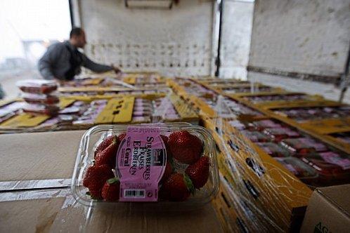 Israël autorise l'exportation de fraises et de fleurs en provenance de Gaza – par Ftouh Souhail