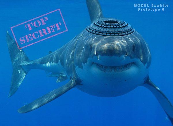 Un requin sioniste applique la charia en attaquant les touristes kouffars en Egypte