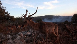 Incendie en Israël: le comportement des animaux étaient anormal