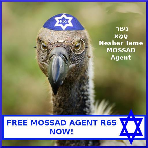 Les Saoudiens capturent un vautour qu'ils considèrent comme un espion israélien – Une brillante enquête saoudienne