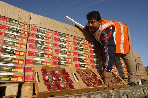 Agrexco, commence à exporter les tomates de Gaza