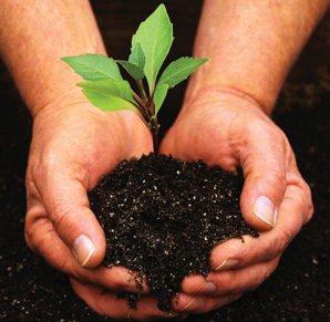 Plantons des arbres en Samarie !  – Pasteur Gérald FRUHINSHOLZ