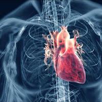 L'annonce d'un grand espoir israélien pour traiter l'insuffisance cardiaque provoque une aphasie chez David Pujadas