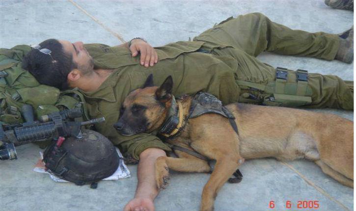 L'unité canine de Tsahal a elle aussi combattu le terrorisme à Gaza (vidéo)