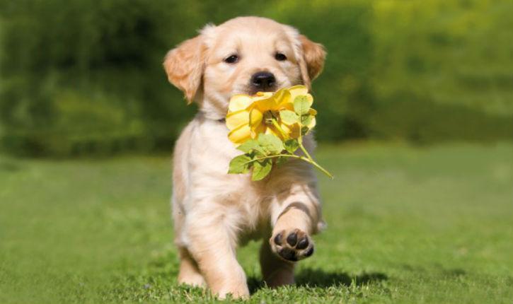 Iran: posséder un chien passible de 74 coups de fouet
