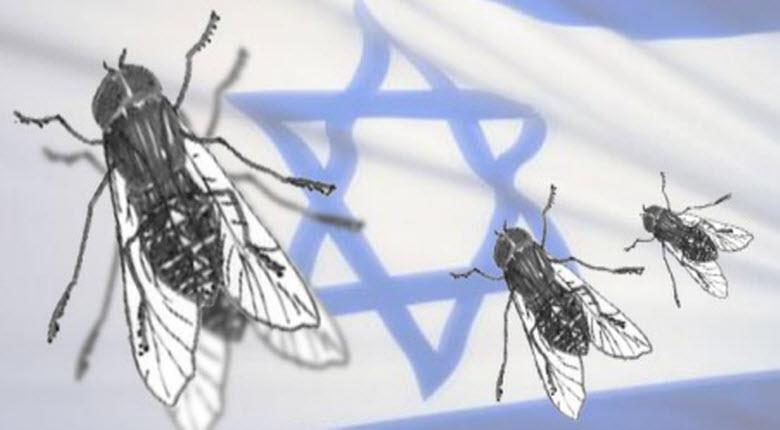 Israël exporte des larves de mouches traitées qui permettent  d'éviter d'employer des produits insecticides