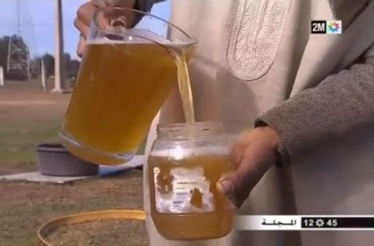 Maroc: Un reportage recommande de boire l'urine de chameau contre le cancer – Vidéo