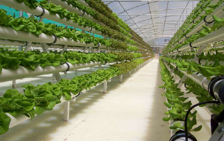 La Russie et Israël signeront un accord de libre-échange et d'achats réciproques de produits agricoles
