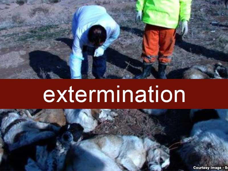 Iran: posséder un chien devient passible de 74 coups de fouet