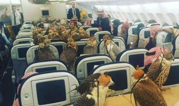 Un prince saoudien fait voyagerses 80 faucons parmi les passagers d'un vol de la compagnie Qatar Airways