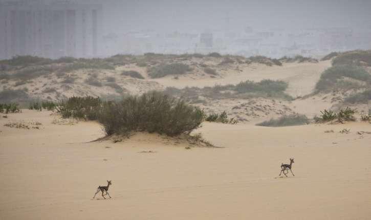 L'ONU dérangée par deux «gazelles-colons» israéliennes….