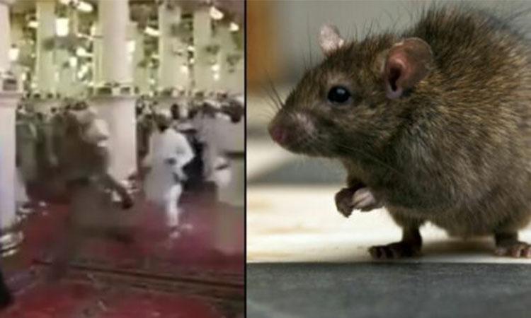 Algérie : Un rat sème la panique causant plusieurs blessés dans une mosquée de Larbaa