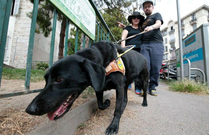 Nice : 3 jeunes se filment agressant une aveugle et son chien avec leur rottweiler