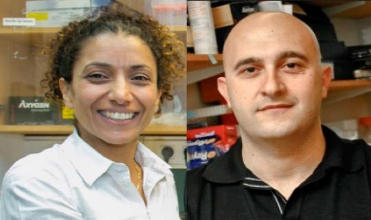 Des chercheurs israéliens ont réussi à transformer des cellules des organes du corps en cellules dermiques