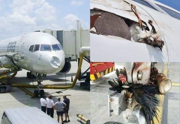 [Photos] Fait rare, un avion de la compagnie British Airways est attaquée par des oiseaux