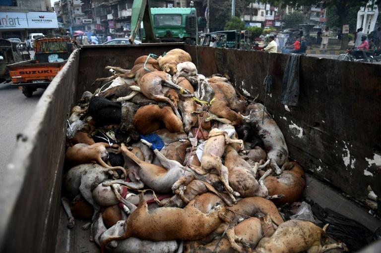 Palestine-Gaza: 2 euros payé pour chaque chien tué