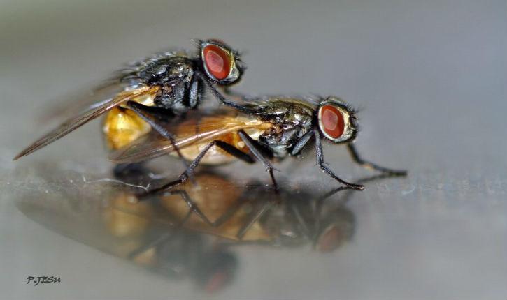 Des scientifiques israéliens étudient les comportements des mouches, pour comprendre la dépendance aux drogues et aux alcools