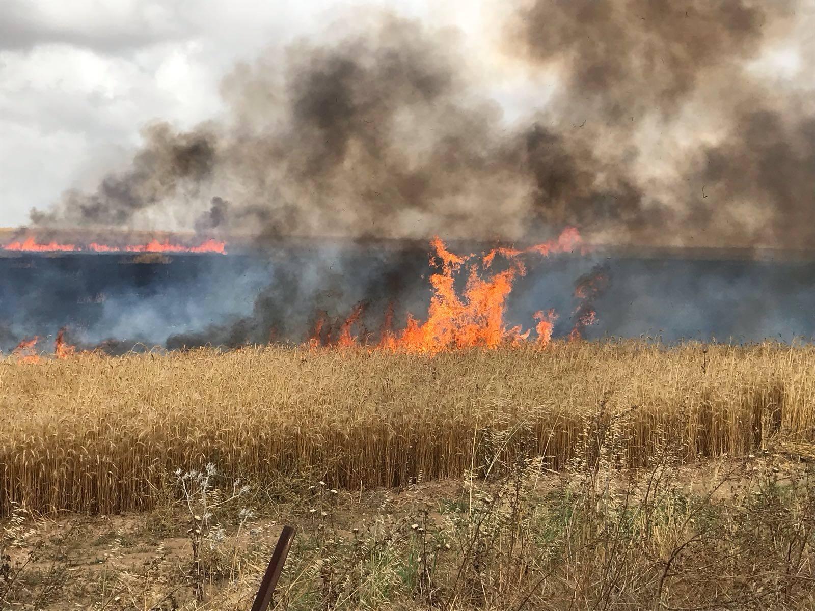 Incendies terroristes en Israël : le Hamas a brûlé plus de 3000 hectares de terres israéliennes brûlées