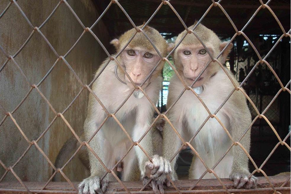 Cette découverte israélienne va mettre fin aux expériences sur les animaux de laboratoire