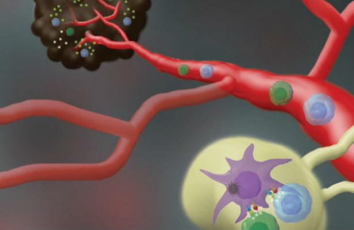 Des chercheurs de l'Université de Tel Aviv développent un vaccin contre le cancer de la peau le plus agressif, le mélanome