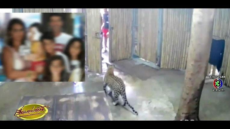 Un enfant israélien de deux ans attaqué par un léopard en Thaïlande (Vidéo choc)