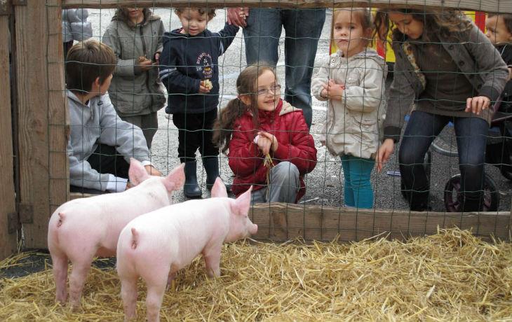 """Des professeurs racontent l'intégrisme religieux à l'école : """"un papa a refusé que la sortie scolaire se fasse car son enfant risquait de rencontrer un cochon"""" (Vidéo)"""