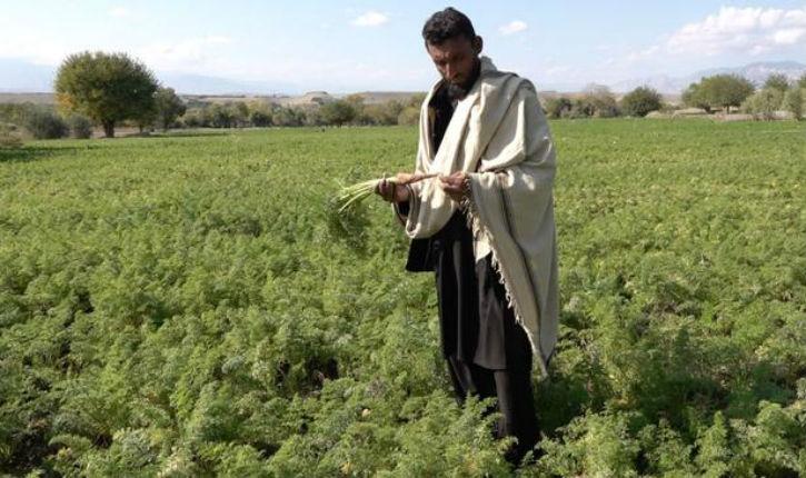 Amnistie gouvernementale: ce taliban repenti qui a combattu durant sept années ne sera pas poursuivi en justice