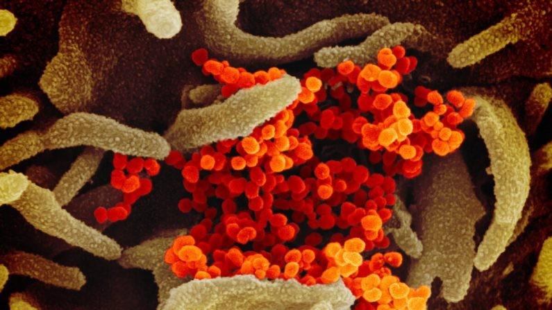 Révélations : Le coronavirus chinois a probablement été introduit sur le marché de Wuhan par des humains, et non par des animaux, selon une étude