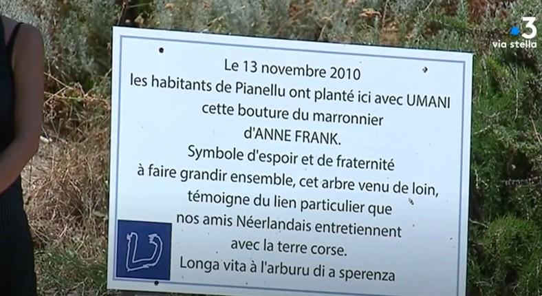 Antisémitisme en Corse ? Un arbre à la mémoire d'Anne Frank vandalisé (Vidéo)