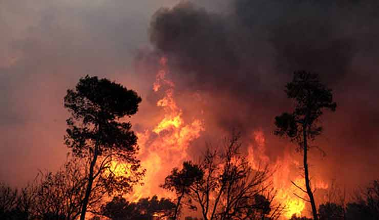 Arabs in Israel are playing with fire: 'Half of fires caused by repeated arson'